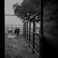 two sweet amazing horses